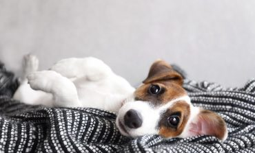 L'arredo cavalca il trend del 'pet market'