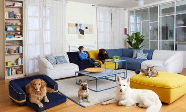 Divani&Divani lancia la collezione 'Kids & Pets'